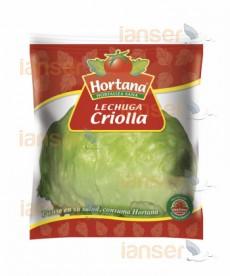 Lechuga Criolla
